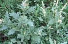 Химические препараты для борьбы с сорняками