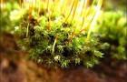 Каллы и мох