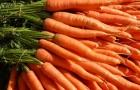 Сорт моркови: Кардаме f1