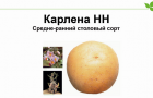 Сорт картофеля: Карлена