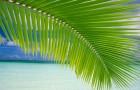 Композиция двойная на пальмовом листе