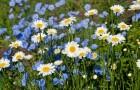 Композиция из соломы и летних цветов