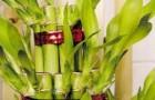 Композиция с бамбуком и каланхое