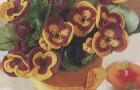 Кухонные часы и вязаные цветы