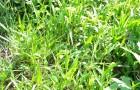 Надземная часть растений (трава)