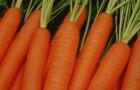 Сорт моркови: Неликс f1