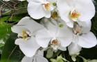 Оформление орхидеями