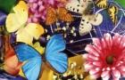 Определитель бабочек