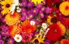 Определитель садовых цветов