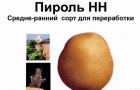 Сорт картофеля: Пироль