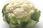 Сорт капусты цветной: Планер f1