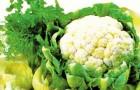 Сорт капусты цветной: Полярная звезда