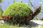 Придание форм растениям