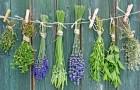 Пряные растения — составная часть вашего здоровья
