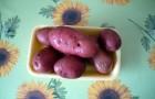 Сорт картофеля: Розанна