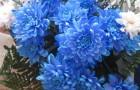 Розы и хризантемы с кофейными зернами