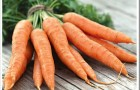 Сорт моркови: Шантенэ а кур руж 2