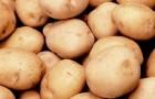 Сорт картофеля: Сагитта