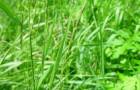 Салат из корневищ пырея ползучего и свеклы