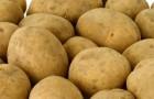 Сорт картофеля: Сьерра