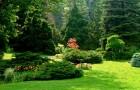 Солнечный сад
