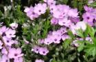 Цветение растений можно вызвать в любое время года