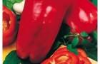Сорт перца сладкого: Тополин