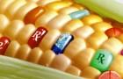 Все больше стран отказываются от ГМ семян