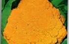 Сорт капусты цветной: Ярик f1