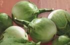 Сорт баклажана: Зелененький