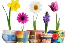 Определитель комнатных растений