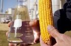 Сорт кукурузы: Хопер 160 вс