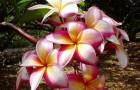 Наличие каких характеристик - залог успеха растения