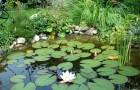 Берег водоема в виде цветущего луга