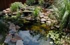 Декоративные травы для оформления водоемов