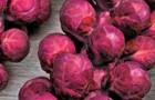 Сорт капусты брюссельской: Гранатовый браслет f1