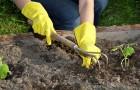 Как сделать почву более теплой
