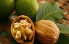 Маска масляная с грецкими орехами