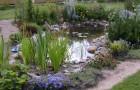 Море в саду