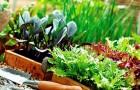 Осенние овощи у вас на балконе
