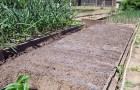 Посев на грядки
