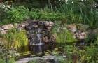 Растения мелководья и прибрежные растения для оформления водоема