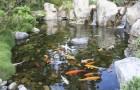 Заселение естественного водоема