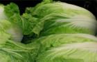 Сорт капусты пекинской: Маркет f1