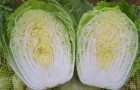 Сорт капусты пекинской: Ника f1