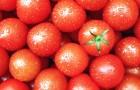 Почему помидоры - лучший ингредиент для блюда
