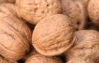 Сорт ореха грецкого: Юбиляр