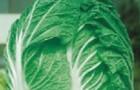 Сорт капусты пекинской: Юки f1