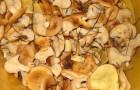 Начинка из грибов