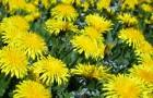 Проводим детоксикацию организма травами